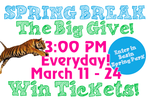 /_uploaded_files/springbreakgiveaway.png