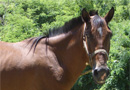 Bear Mountain Riding Stables & Dude Ranch