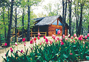 Cherokee Mountain Log Cabin Resort